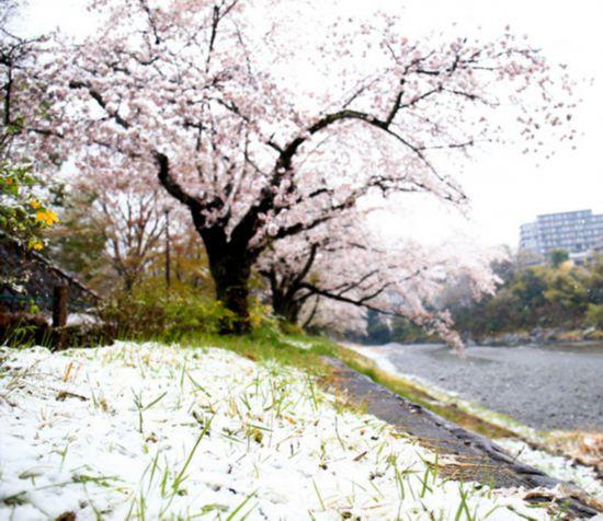 东日本地区迎来大降温 多地出现降雪天气(图片来源:朝日新闻网站)