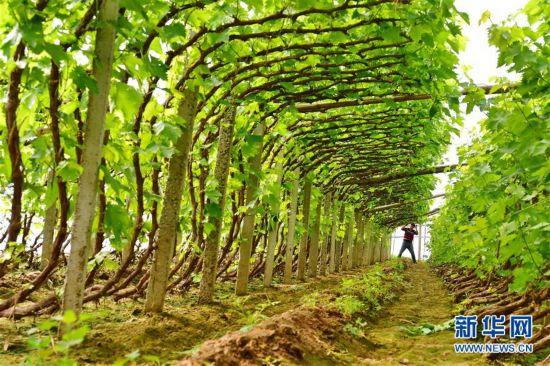 (社會)(1)果蔬種植助增收