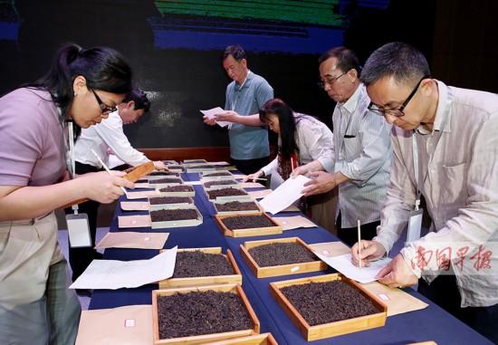 六堡茶斗茶大赛评出11个金奖 最高拍到2.72万/斤