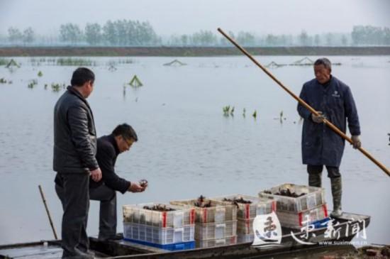 宿迁泗洪:稻虾养殖推动乡村振兴