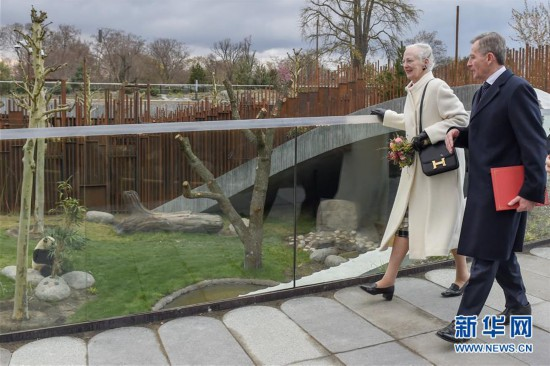 (国际)(1)丹麦女王为哥本哈根动物园熊猫馆揭幕
