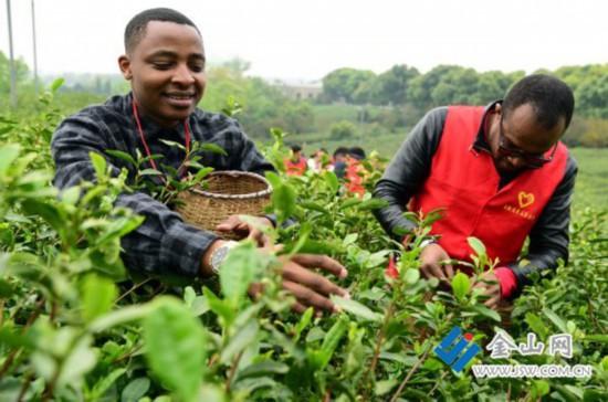 镇江:外国留学生体验茶文化
