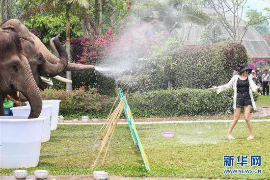 (社会)(1)大象泼水庆傣历新年