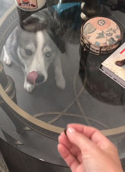 """狗被主人""""戲耍""""隔著玻璃吃不到零食一臉疑惑"""