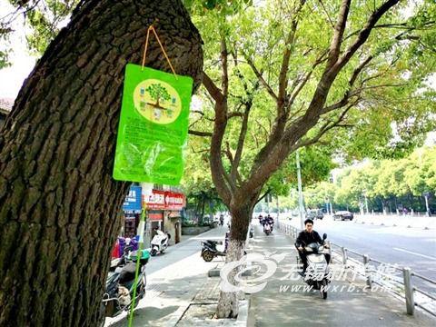春季病虫害多发 无锡行道树挂上营养液