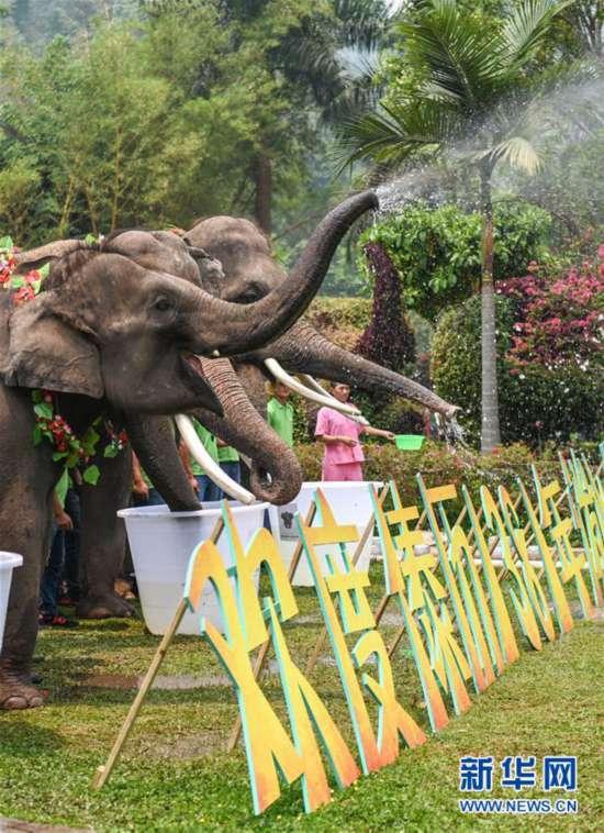 (社会)(3)大象泼水庆傣历新年