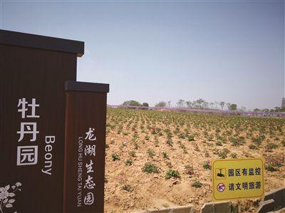 """南京高淳""""牡丹花海""""名不副实 景区紧急整改"""