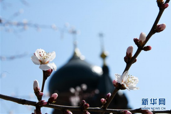 """(环境)(3)""""百年教堂""""春光美"""
