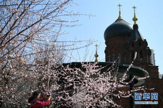 """(环境)(2)""""百年教堂""""春光美"""