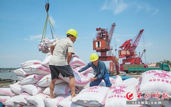 ↑2011年8月18日,长沙新港件杂货日吞吐量首次突破一万吨,工作人员正在装卸散包货物。