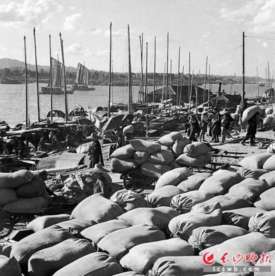 1963年8月15日,早稻丰收,粮运战线特别繁忙。这是新谷运抵长沙港码头,运输工人忙着卸粮入库。