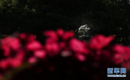 (国际·北京世园会)(1)世界园林巡礼——悉尼皇家植物园