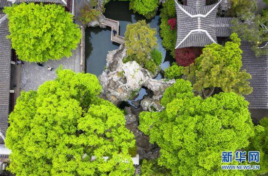 苏州古典园林绿意盎然 吸引大量游客前来游览