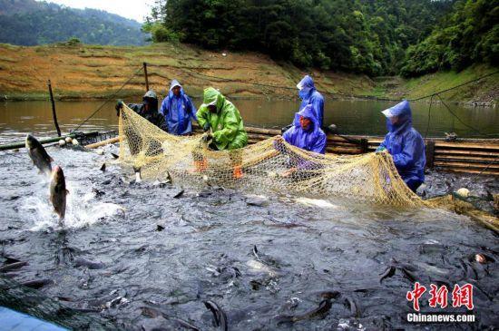 福建渔民拉网捕鱼喜迎丰收