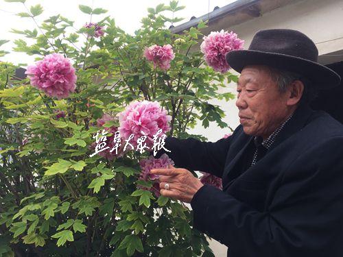 盐城树龄百年牡丹开花20朵 最大花径22厘米