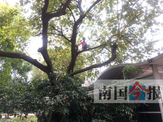 12岁少年七天三爬大树不下来 到底有什么想不开?