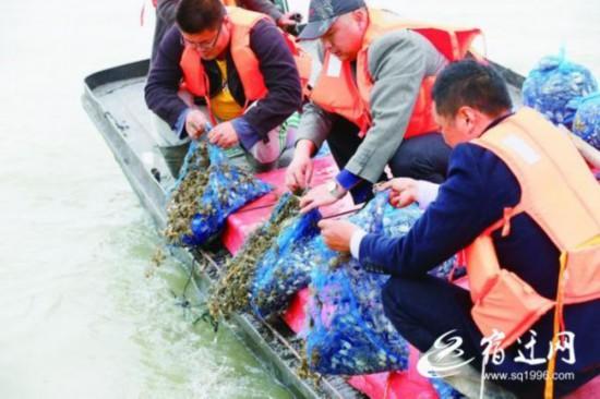 宿迁泗洪:放流增殖洪泽湖 改善区域水环境