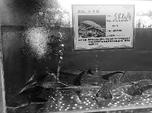 """无锡""""夏联福记""""""""金宴""""酒店公开卖鳄鱼、娃娃鱼"""