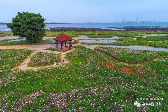 来,跟随镜头走进泉州滨海公园这片花海