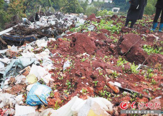 尽管覆了土,种了树和草,但大量装修垃圾还是露出来了。  长沙晚报全媒体记者 谢春年 摄