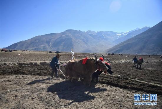 (经济)(1)西藏日喀则:高原深处春耕忙