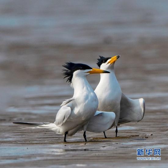"""""""神话之鸟""""现身闽江沙洲"""