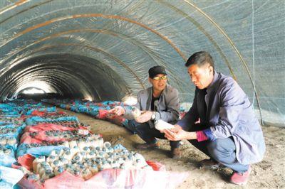 三河镇:菌菇飘香助脱贫