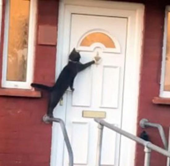 英国一只黑色猫咪不断摇门环敲门 礼貌行为引关注