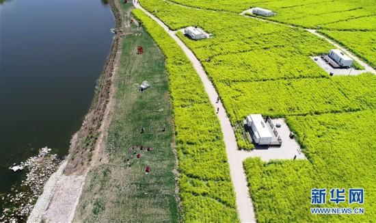 """(环境)(4)天津:郊野公园变""""城市氧吧"""""""