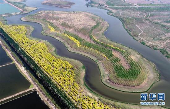 """(环境)(1)天津:郊野公园变""""城市氧吧"""""""