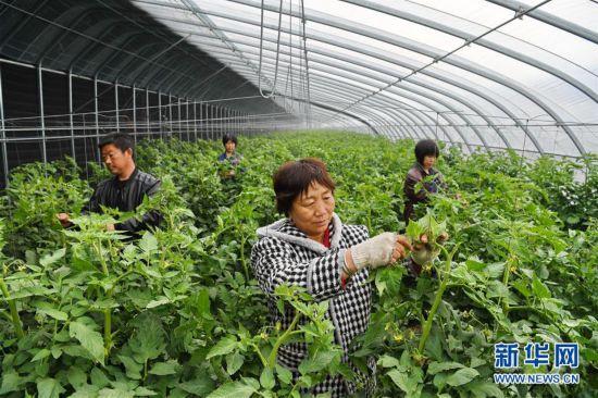 (经济)(1)河北滦州:高效设施农业助力乡村振兴