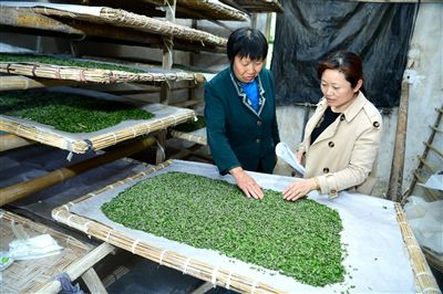 2019年海安春蚕发种7.3万张 共育饲养提升产量