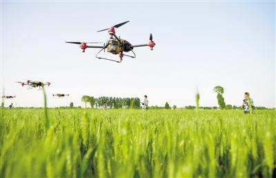 植保无人机保障小麦生产