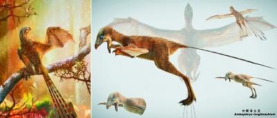"""最新成果!我国古生物学家发现""""长臂浑元龙"""""""
