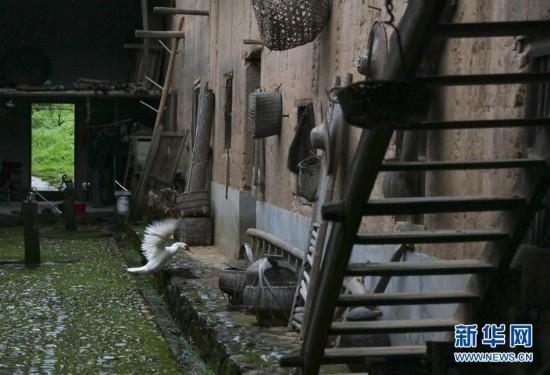 """(壯麗70年)(5)華屋""""紅軍村""""的幸福蛻變"""