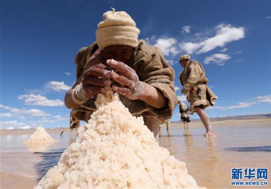 (专发新华网西藏频道)(图文互动)天边的驮盐队――藏北牧人远去的背影(11)