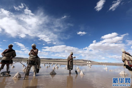(专发新华网西藏频道)(图文互动)天边的驮盐队――藏北牧人远去的背影(10)