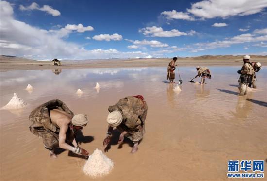 (专发新华网西藏频道)(图文互动)天边的驮盐队――藏北牧人远去的背影(12)