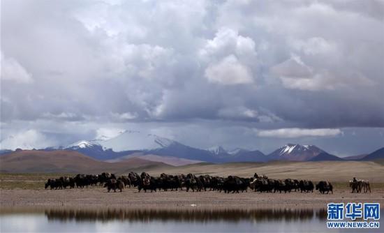 (专发新华网西藏频道)(图文互动)天边的驮盐队――藏北牧人远去的背影(1)