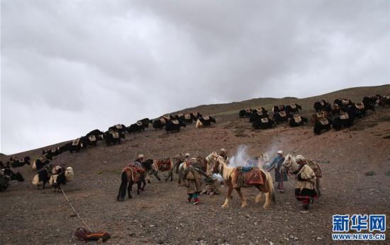 (专发新华网西藏频道)(图文互动)天边的驮盐队――藏北牧人远去的背影(22)