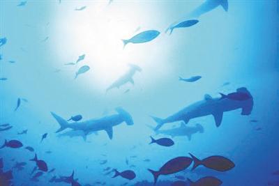 """并不是""""色盲"""" 深海鱼类 也有彩色视觉"""