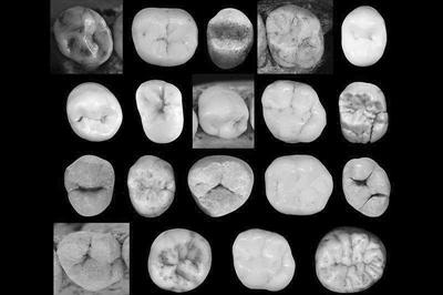 """尼安德特人与现代人或于80万年前""""分道扬镳"""""""