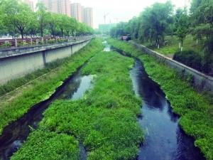 人大代表视察南京长江大保护 并现场致电河长