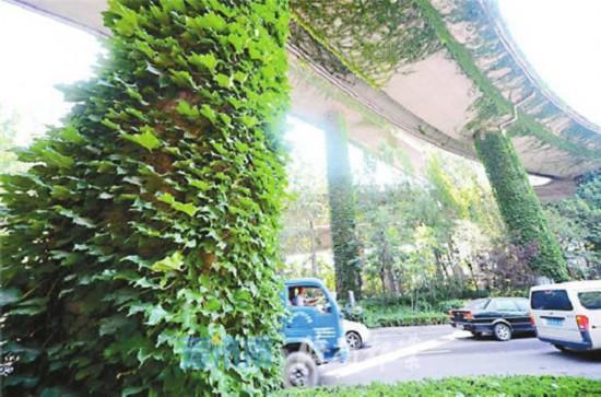 山东城市立体绿化管理细化 新建公共建筑条件适宜屋顶60%应绿化