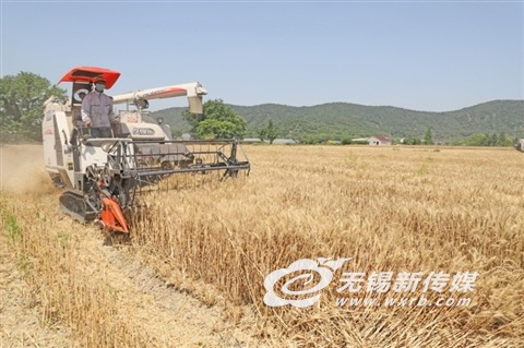 无锡滨湖区马山农民开展夏收夏种