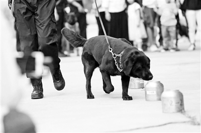 北京公交總隊警犬亮絕活空氣中嗅毒准確搜索爆炸物