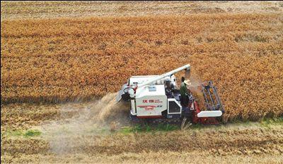 又到农忙季 南通海安村民抓紧收割小麦