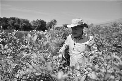 德国小伙南京溧水当农民 带着祖传手艺种蓝莓