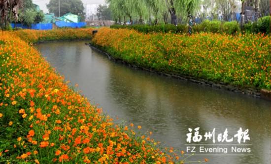 福州白湖亭河示范段首迎花期 花期将持续约两个月