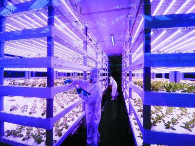 """探访南京首个植物工厂:""""种菜""""着防护服"""
